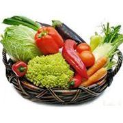 Закупка овощей (морковь капуста свекла) фото