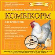 Бройлерный цыпленок фото