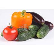 Овощи :огурцы фото