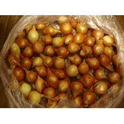 Лук-севок семена лука