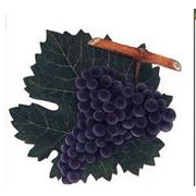 Саженцы винограда винных сортов Cabernet Sauvignon фото