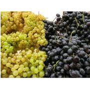 Саженцы винограда кишмишных сортов фото