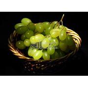 Саженцы винограда ранних сортов фото
