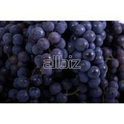 Саженцы винограда поздних сортов фото