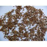 Продажа семян: люцерны  суданской травы эспарцета чернушки халцидона укропа морквы наута щавеля фото