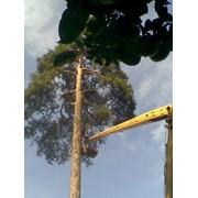 Удаление аварийных деревьев в Караганде фото