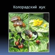 Защита растений от вредителей в Белоруссии (Минск) фото