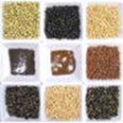Семена для луговодства фото
