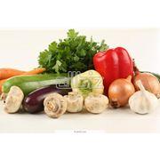 Семена для овощеводства продам Одесса.