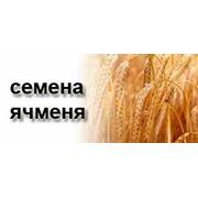 Калорийность Ячмень зерно цельное необработанное