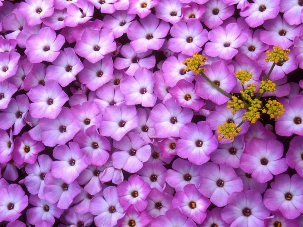 Купить цветыв горшке в донецке розы акито купить