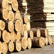 Деревообработка фото