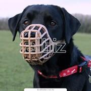 Намордники для собак в Алматы фото
