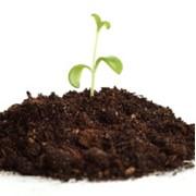 Грунт растительный фото