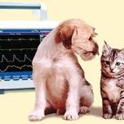 Консультация, постановка диагноза животным фото