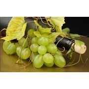 Пробки для бутылок Пробка корковая и синтетическая фото