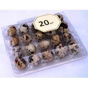 Упаковка для перепелиных яиц. 20 штук. фото