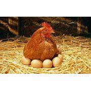 Лотки для яиц опт-роз. фото