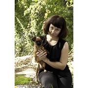 Пти брабансон ,вязка, запись на щенков фото