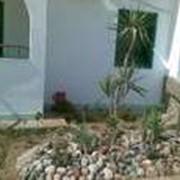 фото предложения ID 330277