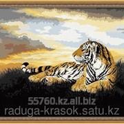 Картина по номерам цифрам ТИГР фото