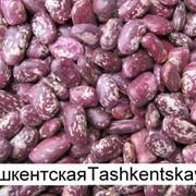 ФАСОЛЬ ТАШКЕНТСКАЯ фото