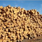 Распиленная, очищенная от коры, строганая, разрезанная и дополнительно обработанная древесина фото