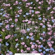 Посадка цветов фото