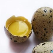 Яйца перепелиные инкубационные фото