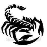 03103 Наклейка (вырезанная) «Скорпион» рисунок №2, наружная, (цвет асорти), 10х10 см фото