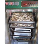 Инкубатор автоматический на 1350 перепелиных яиц (450 куриных) фото