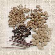 Дражированные семена пакетированные. фото