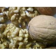 Selling the kernel of a walnut from Ukraine for export. фото