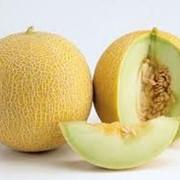 Дыни и арбузы, тыквы, ягоды, сладкие бахчевые культуры. Фрукты и овощи свежие зеленые собственного выращивания без применения химических веществ. В наличии есть семена бахчевых культур. фото