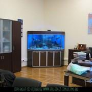 Аквариумный комплекс. Обслуживание аквариумов фото