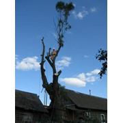 Спилить дерево на кладбище фото