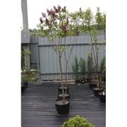 Обрезка плодовых деревьев. фото