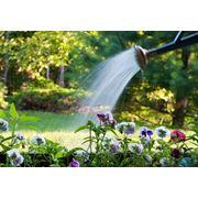 Весенне-осенние работы по уходу за садом фото