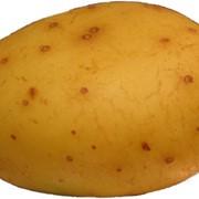Картофелеводство фото