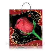 Роза бордо фото