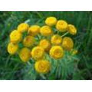 Пижма в капсулах лекарственное растение лечебняа трава экстракт препарат противомикробный купить фото
