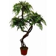 Искусственное дерево Фрутсия Тагай (Код товара: 59621) фото