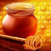 Мед подсолнечниковый, Мед оптом от 10 до 40 тонн, в бочках по 290 кг. Мед отличного качества, с документами. Мед подсолнуха. фото