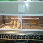 Брудер для цыплят каркасный БРКП-80 ЕвроФермер78 фото