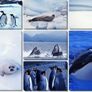 Модульная картина Северные животные , Неизвестен фото