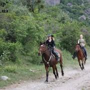 Конные походы и катание на лошадях в Крыму фото