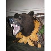 чучело головы медведя фото