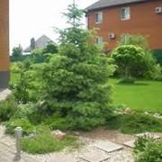 Благоустройство территории, ландшафтный дизайн озеленение и благоустройство территории фото