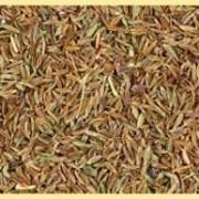 Кумин/зира (семена) фото