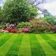 Семена цветочных и сельскохозяйственных культур, многолетних трав. фото
